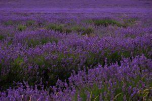 floral-preservation