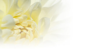 about-timeless-flowers-preservation