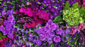 flower-preservation-guide-care