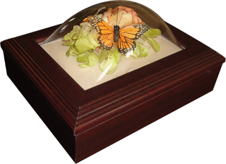 Preserved flowers in a keepsake box.