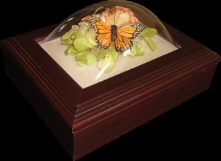 Preserved flowers in a keepsake box.