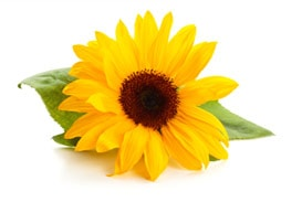 preserved-floral-preservation-info-prices
